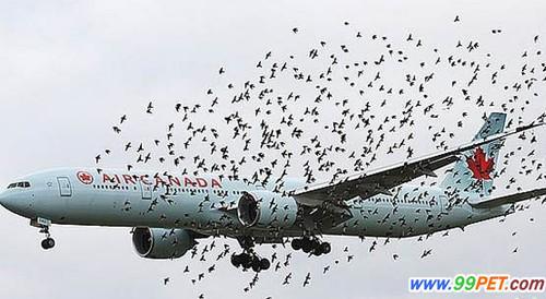 泰航一架飞机在尼泊尔遭飞鸟撞击