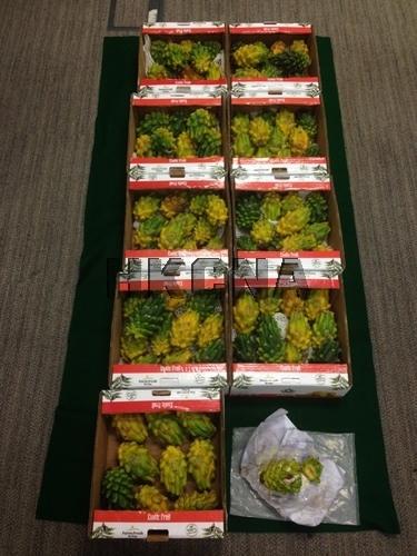 香港机场破获水果藏毒案 海关检获逾1500万元毒品